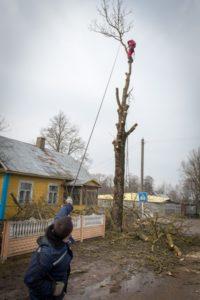 Работник в низу перетягивает ветку в сторону пустого места чтобы спилить дерево